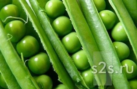 Семена ярового гороха Аксайский усатый 7, Усатый кормовой ЭС.