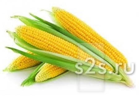 Семена кукурузы Краснодарская 291, Адэвей, LG 31272