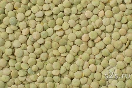 Чечевица зеленая на экспорт