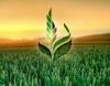 Сельскохозяйственная Экспортная Корпорация